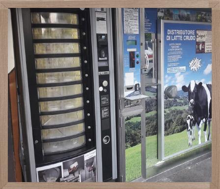 Mucche dell'azienda agricola